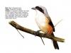 ptaci306