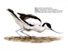 ptaci309