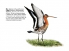 ptaci315