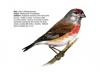 ptaci318