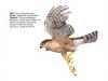 ptaci322