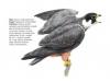 ptaci329