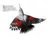 ptaci330