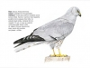 ptaci337