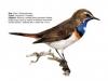 ptaci338