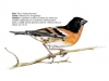 ptaci341
