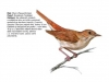 ptaci343