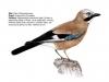 ptaci344