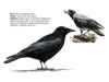 ptaci345