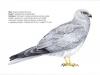ptaci351