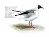 ptaci358