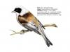 ptaci359