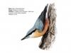 ptaci360