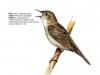 ptaci363