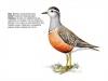 ptaci365