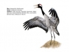 ptaci369