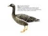 ptaci371