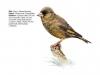 ptaci375