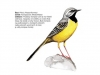 ptaci379