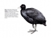 ptaci391