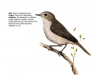 ptaci399