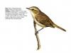ptaci402