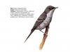 ptaci403