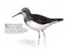 ptaci404