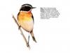 ptaci405