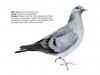 ptaci406