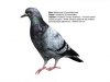 ptaci407