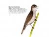 ptaci408