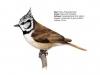 ptaci411