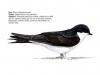 ptaci412