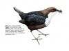 ptaci415