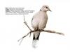 ptaci416