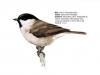 ptaci418