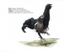 ptaci419