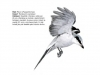 ptaci420