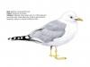 ptaci426