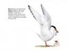 ptaci428