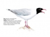 ptaci430