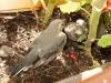 ptacci-002-d5bfff0a1f5d85d2018f71ec20d0fee3b844b060