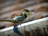 sparrow-827374_1920-c1261fbda145cd70537f9aef3d40da6ab6ebeb60