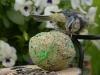 bird-1685878_1280
