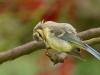bird-1685881_1920