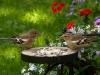 bird-1703802_1920
