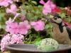 bird-1703815_1280