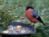 bird-1983851_1920