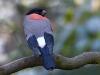 bird-1983855_1280
